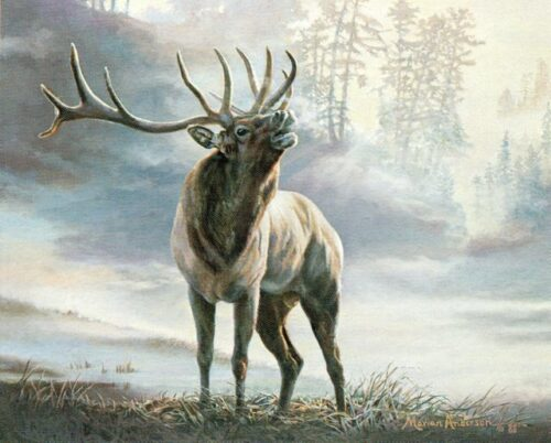 Fine art print featuring a bull elk in Lord of the Timber by Marian Anderson
