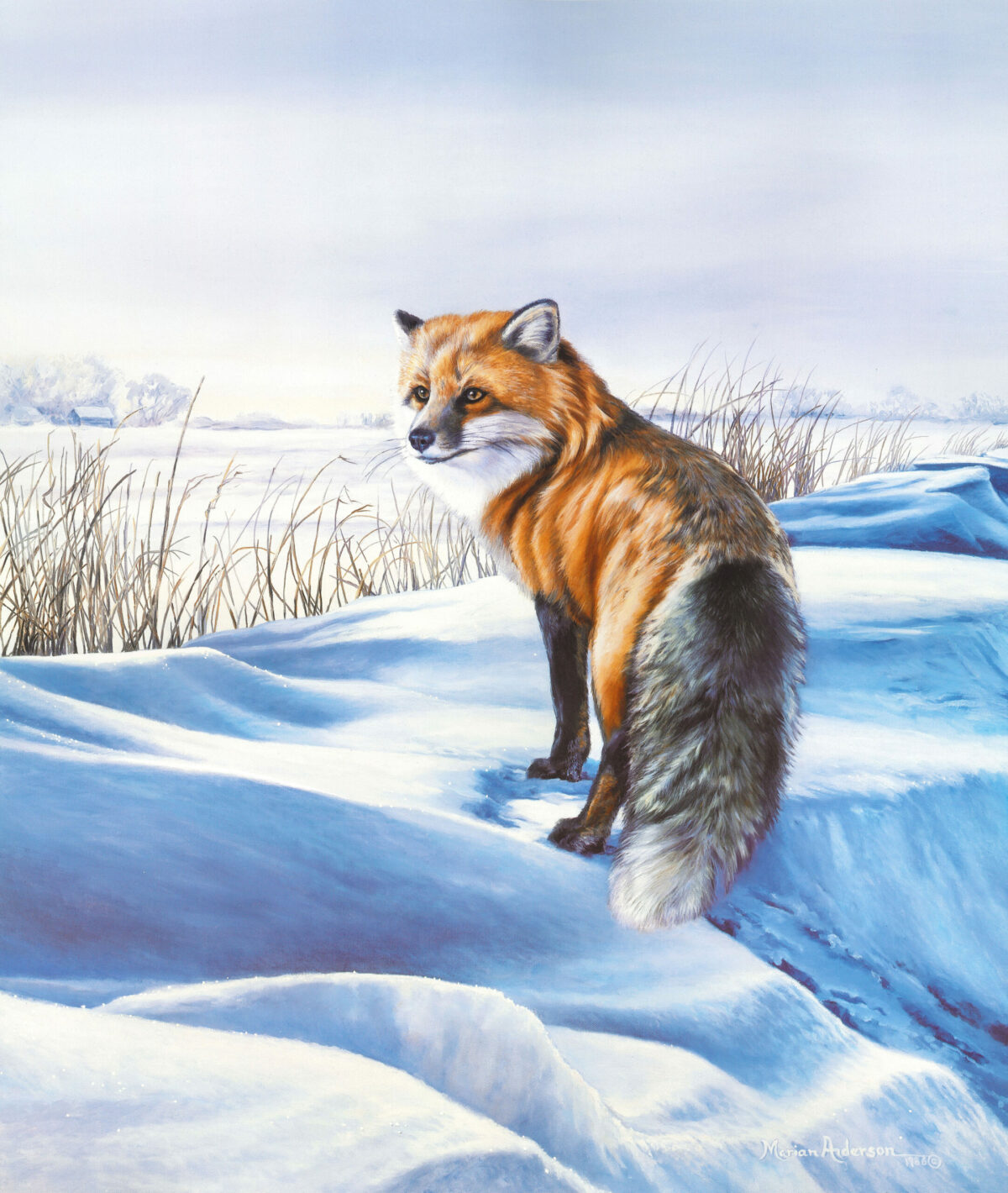 """A red fox in a snowy landscape, a print titled """"Open Boundaries"""" by artist Marian Anderson"""