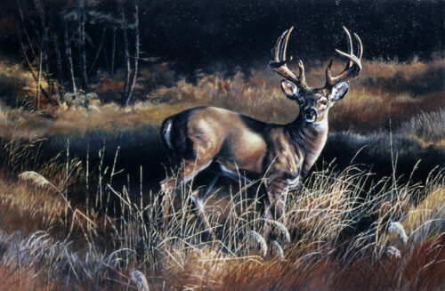 Autumn Encounter, a print by Marian Anderson, shows a white-tailed buck standing watch.