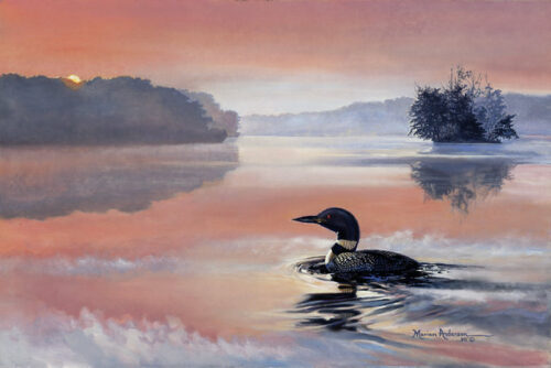 Echoing Sonata, a print by Marian Anderson, shows a single Common Loon on a calm lake with the reflection of a orange and pink sunset.