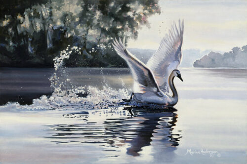 Misty Prelude, a print by Marian Anderson, shows a trumpeter swan spreading its wings over the water.