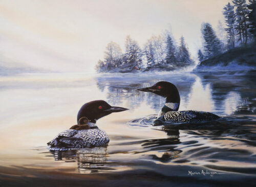Morning Shadows, a print by Marian Anderson, shows a trio of common loons, including a chick riding on its parents back.