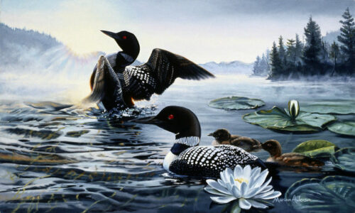 Northern Awakening, a print by Marian Anderson, shows a family of common loons on a northern lake