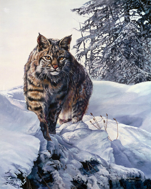 Ridge Stalker, a print by Marian Anderson, shows a bobcat in the snow