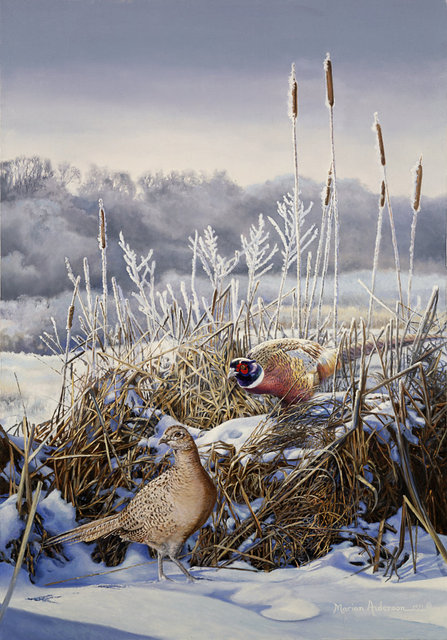 Silent Signal, a print by Marian Anderson, shows a pair of ring-necked pheasants among snowy brush. Winner of the 1991 Artist of the Year Award.