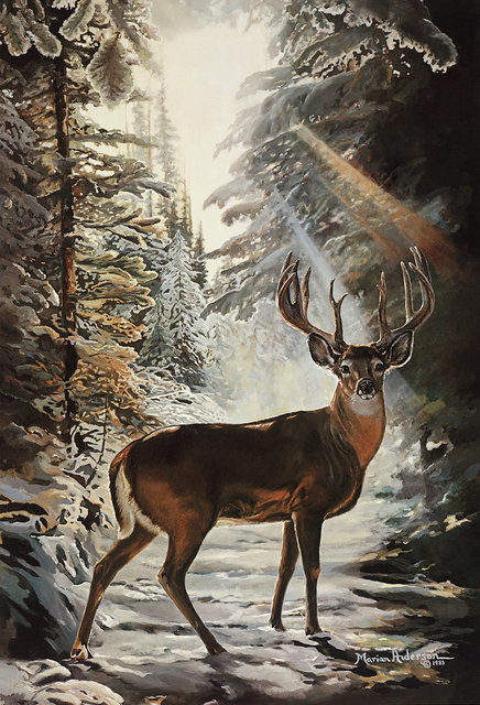 To Pause Again, a print by Marian Anderson, shows a majestic white-tailed buck paused on a wooden trail.