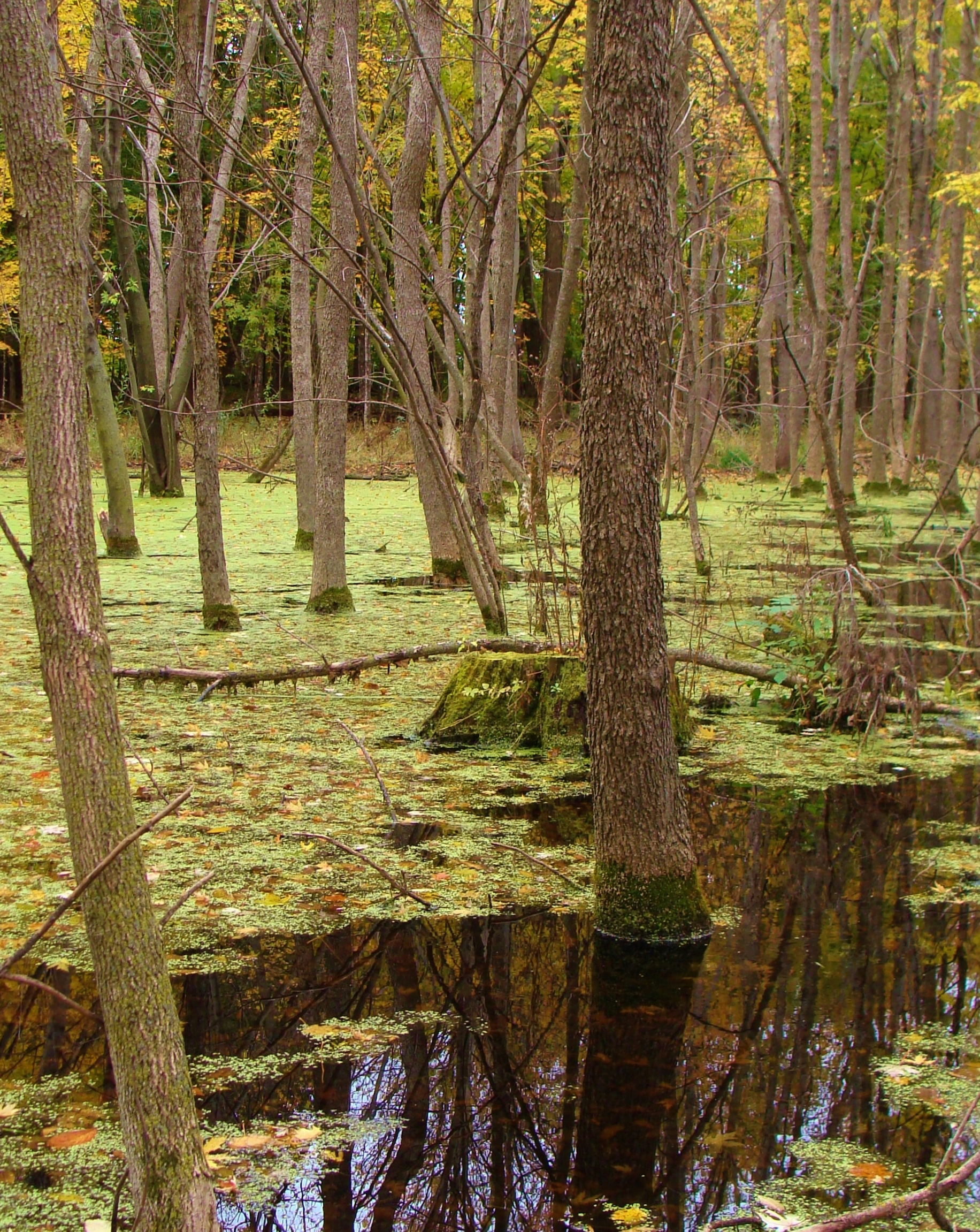 """""""The swamp within"""""""