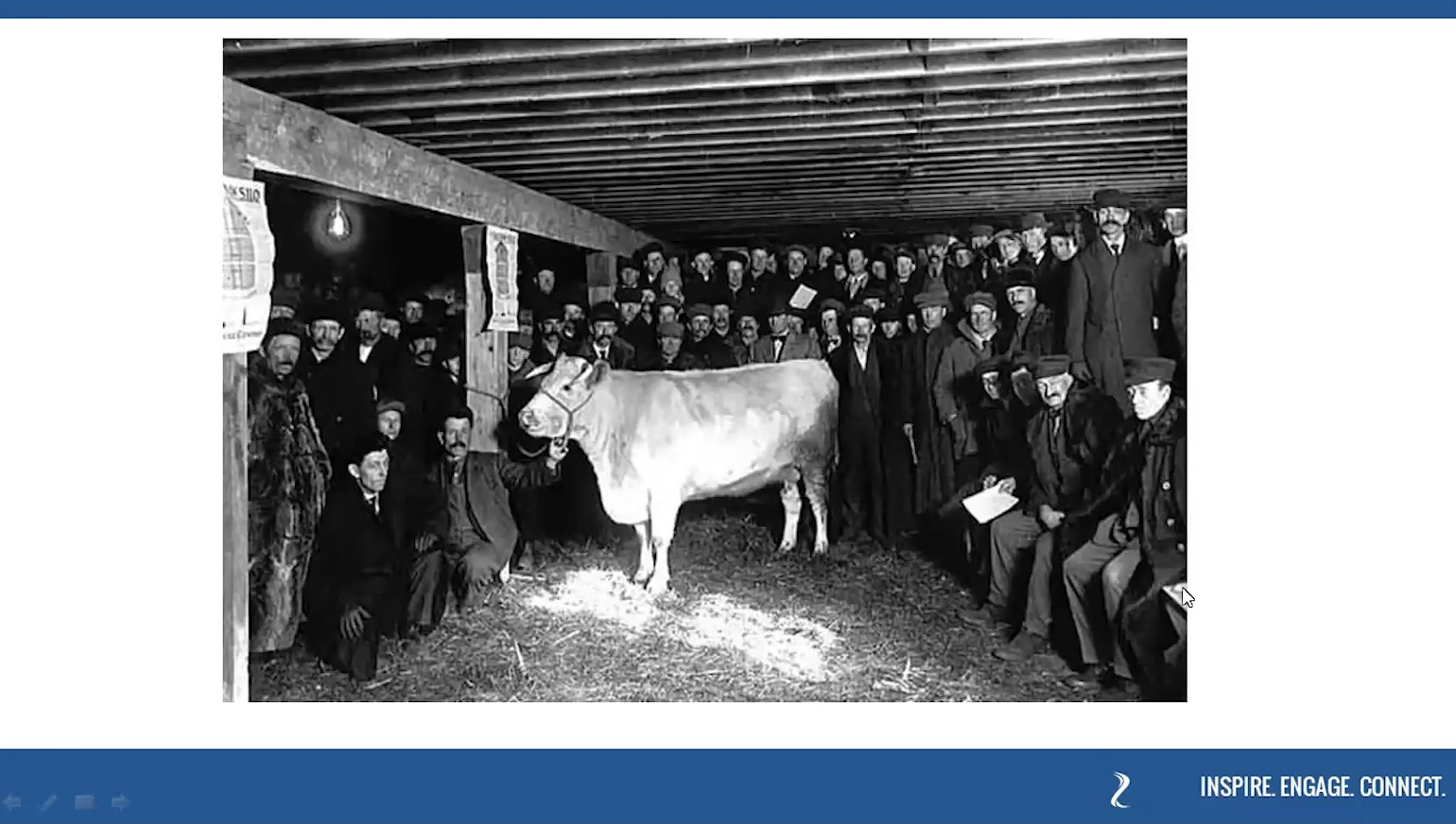 Historic image from the Blue Earth County Fair of a prize winning cattle